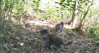 Trovano 4 gattini da soli nel bosco: il seguito è emozionante