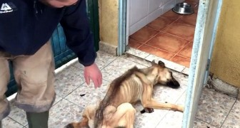 This female dog could barely stand up, but the vets were able to save her life