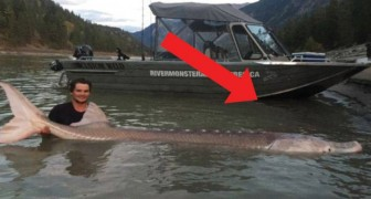 A 19-year-old boy catches a record-breaking sturgeon fish!