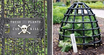 Piante letali da tutto il mondo: scoprite con noi il Giardino dei veleni