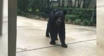 A scary experience --- meeting a bear unexpectedly!