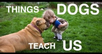 What our faithful friends can teach us