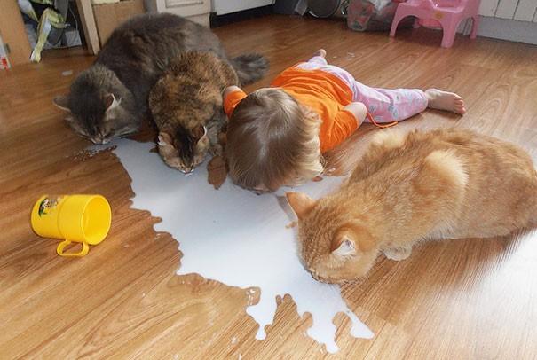 Gatti E Bambini Sono Compatibili Dopo Aver Visto Queste Immagini