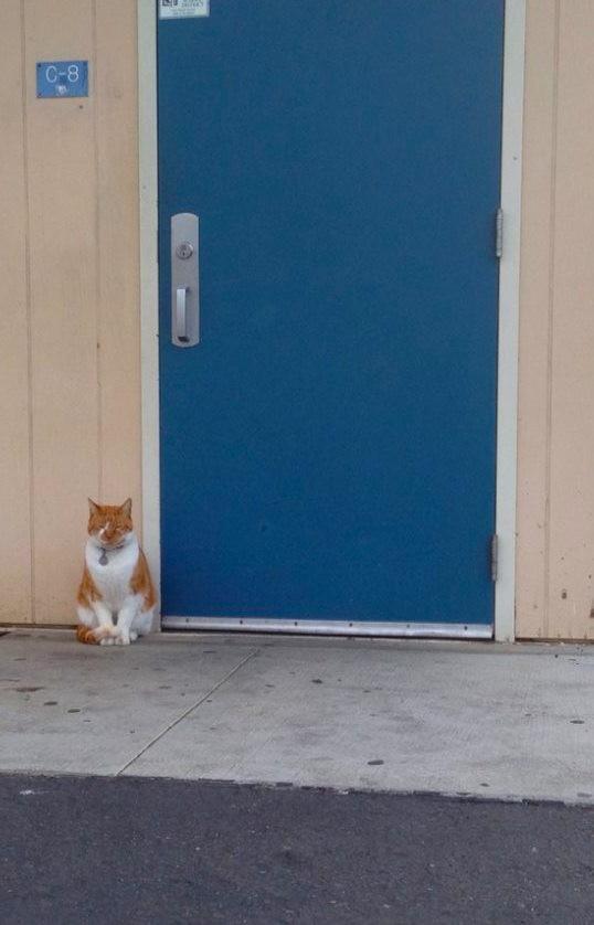 Vi Presentiamo Bubba Il Gatto Che Ama Andare A Scuola Più Di Ogni