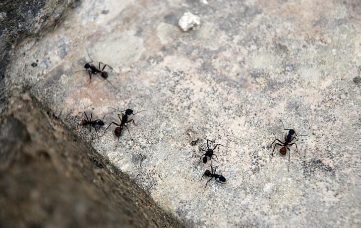 Ein natürliches Mittel gegen Ameisen. So haltet ihr sie von der ...