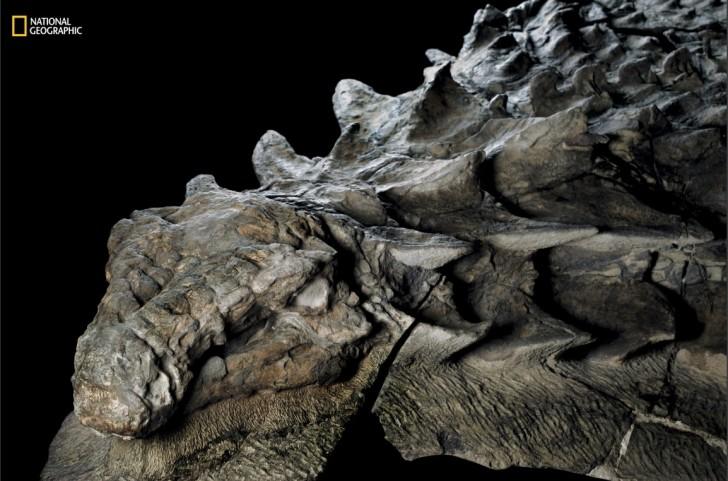 datant roches avec des fossiles