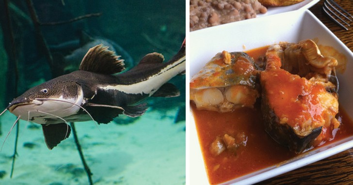 7 Pesci Che Dovresti Smettere Di Mangiare Curioctopusit
