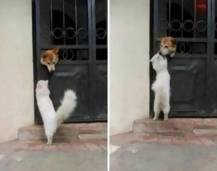 Mini animali lista incontri