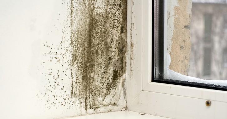 Schimmel Verwijderen Muur : Enkele natuurlijke methodes om schimmel van de muren te