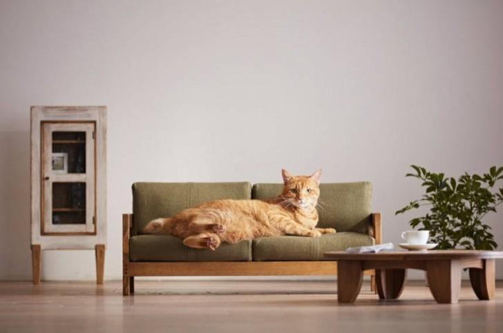 Mobili Per Gatti Fai Da Te : Alcuni fabbricanti di mobili tradizionali giapponesi creano letti
