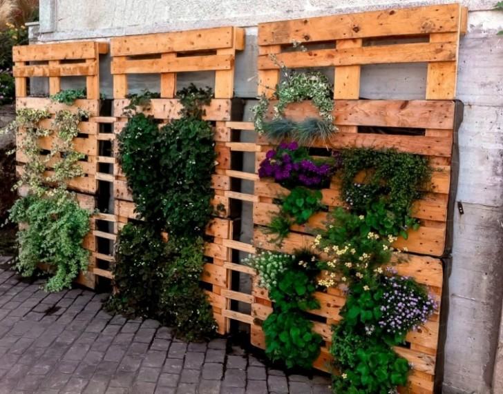 Paletten  Und Kletterpflanzen Passen Perfekt Zusammen!