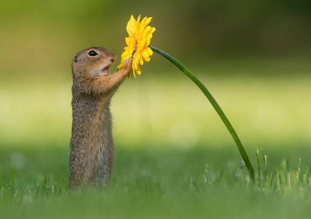 Ce photographe a capturé le moment précis où un écureuil s'arrête pour renifler une fleur