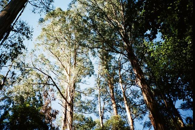 Nieuw-Zeeland plant 1 miljard bomen om klimaatverandering tegen te ...