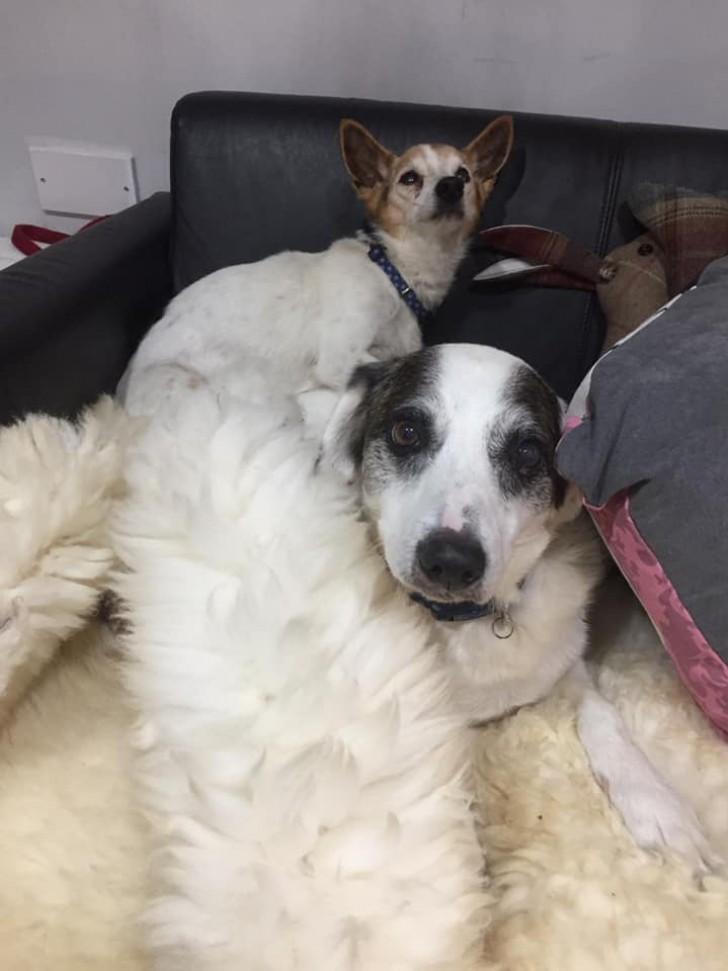 Diese Frau hat bei sich zu Hause ein Hospiz für Hunde