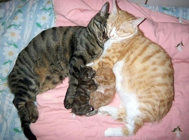 Scatti Di Straordinaria Dolcezza Tra Mamme Gatto E I Loro Teneri