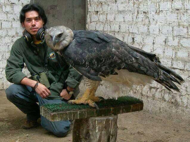 Der Größte Und Mächtigste Adler Der Welt Entdeckt Seine