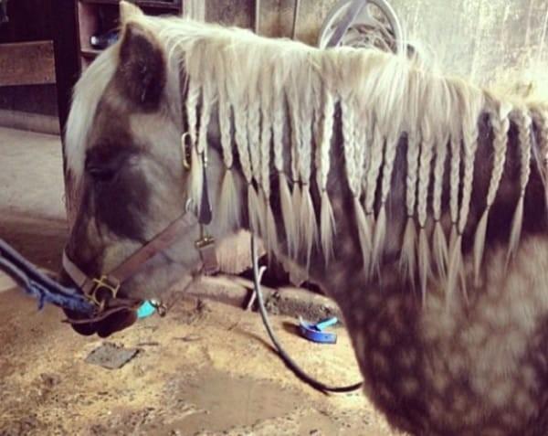 Come Costruire Un Cavallo.Ecco Alcune Delle Acconciature Piu Originali Che Si Possano Fare A