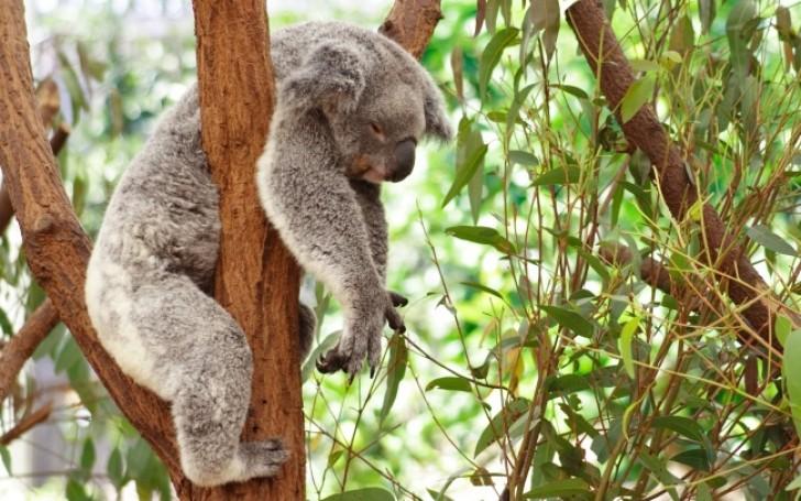 Curiosità sul sonno degli animali 🐰 🐶 🐱