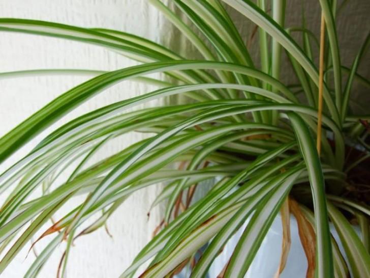 luftverschmutzung im haushalt hier 12 pflanzen die die luft in eurem haus verbessern. Black Bedroom Furniture Sets. Home Design Ideas