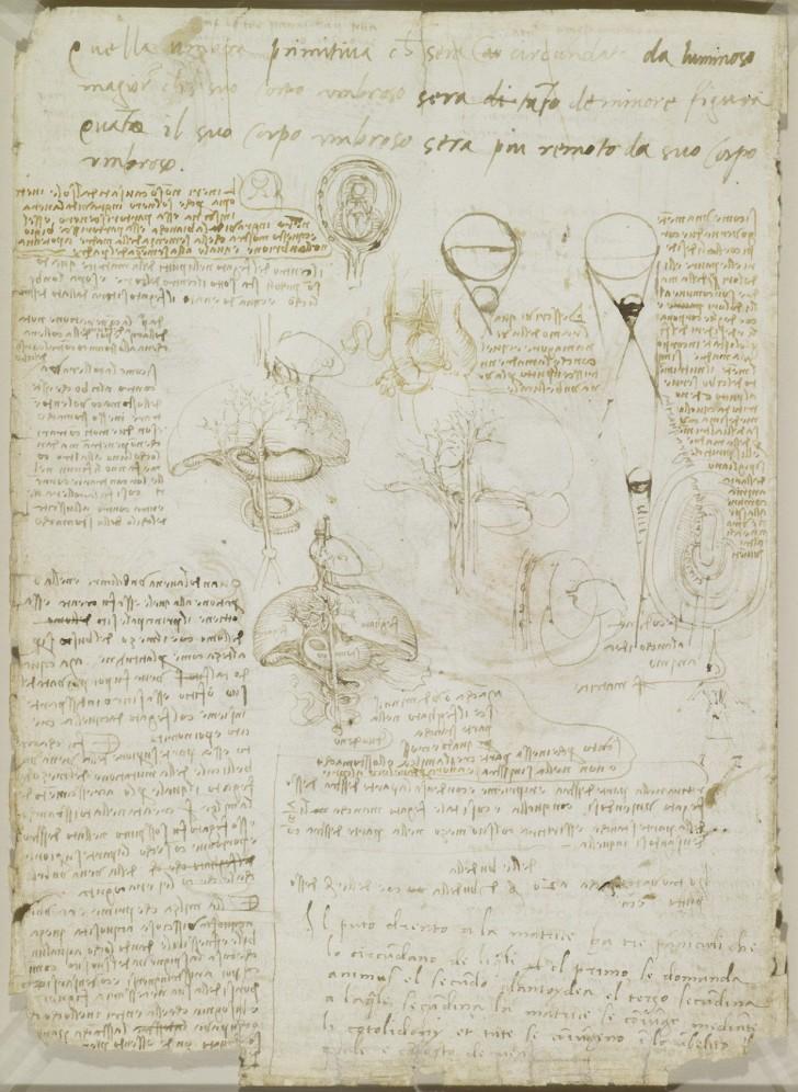 Leonardo\'s Anatomische Studies Gepubliceerd: Ongelooflijke Ontwerpen ...