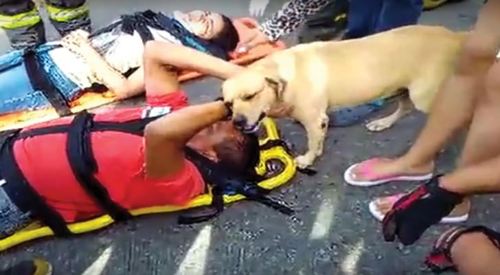 A touching scene of an accident victim comforted by his dog!