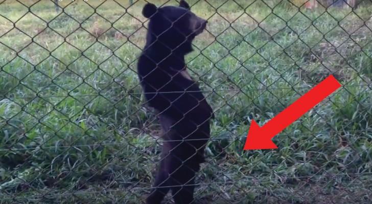 In deze dierentuin stuit je op een tafereel die je mond zal doen openvallen!