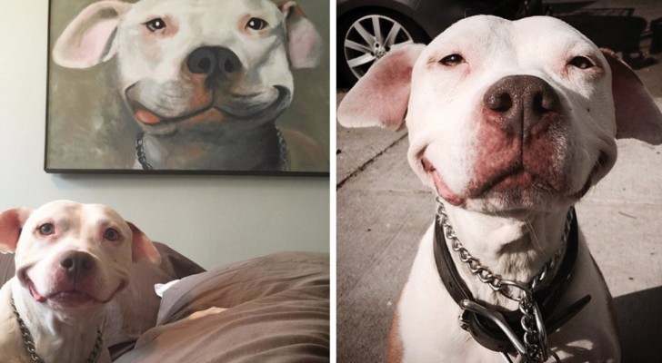 Questo pit bull è stato salvato 12 anni fa e da allora non hai mai smesso di sorridere. Troppo tenero!