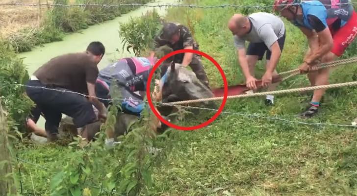 Ils trouvent un cheval piégé dans la boue: le sauvetage de ces cyclistes est un vrai miracle