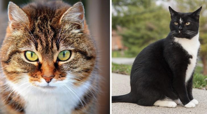 Conoscete davvero i gatti domestici? Ecco 5 curiosità che sicuramente non sapete