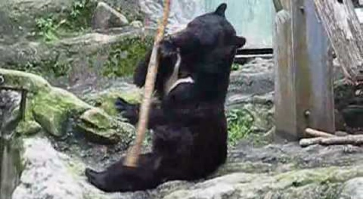 The bear practicing Kung Fu