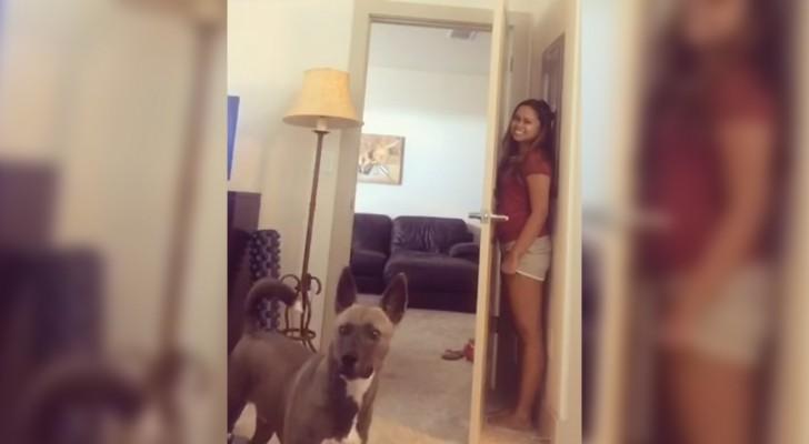 La ragazza gioca a nascondino con il cane: la ricerca del cucciolo è ESILARANTE