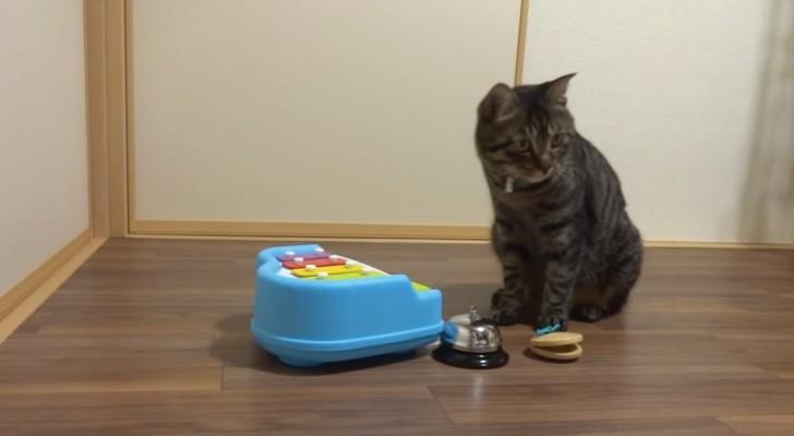 Quando lei inizia a cantare il gatto entra in scena: guardatelo alle prese con questi strumenti!