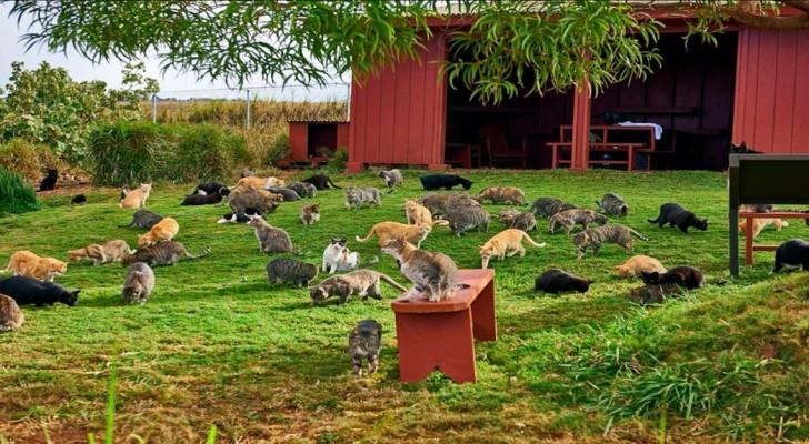500 katten zijn gered van een leven op straat: ze wonen nu allemaal samen op een eiland... Een droom die werkelijkheid is geworden!