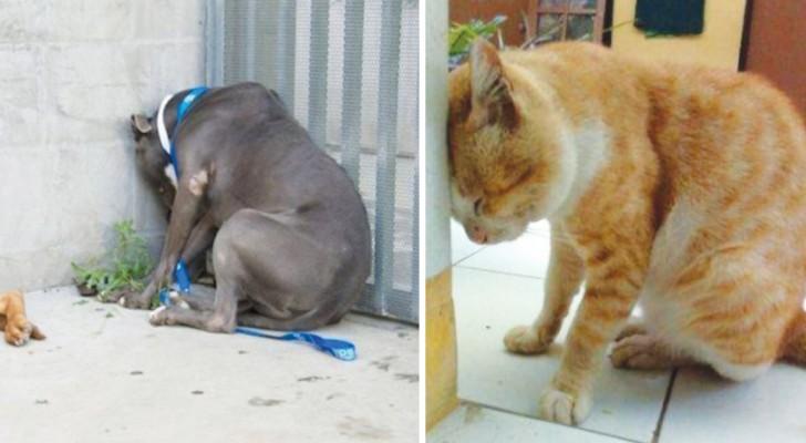 Om ditt husdjur håller huvudet mot väggen utan anledning borde du åka till veterinären direkt. Lär dig varför