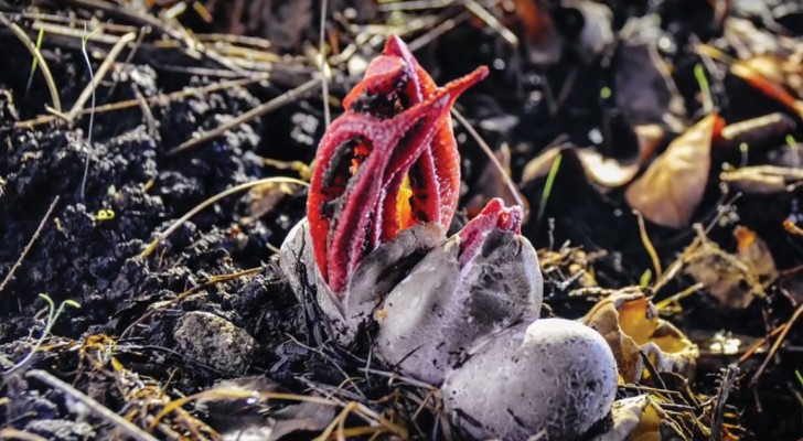 Watch this unusual fungus