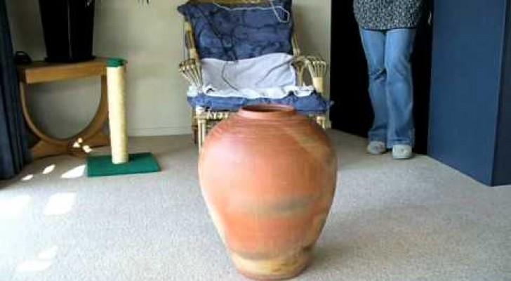 Il gattino entra e esce dal vaso