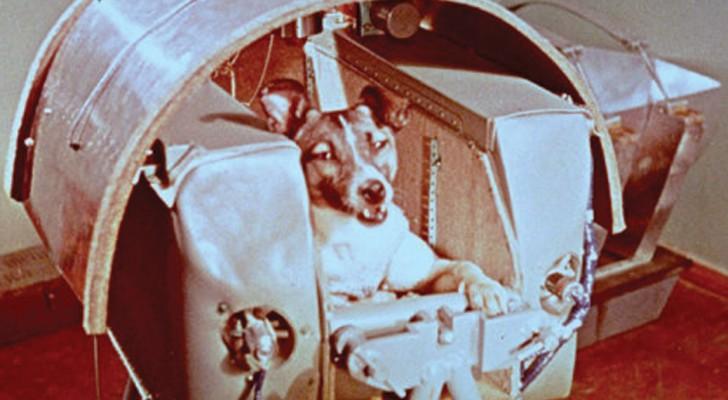 Die wahre Geschichte hinter dem Tod von Laika, der Hündin die im Namen der Wissenschaft geopfert wurde