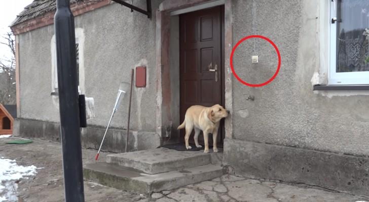 Vuole rientrare a casa ma nessuno le apre: guardate la sua intelligenza dove arriva!