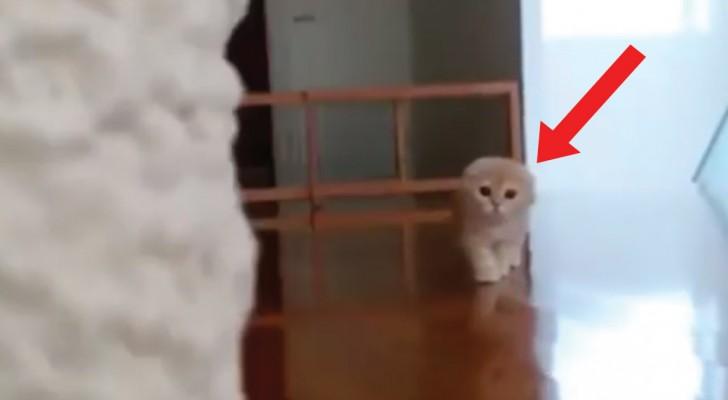 Silenzioso come un ninja: la stretegia di attacco di questo gatto vi conquisterà!