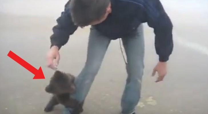 Il rencontre un ourson sur la route: voici comment l'animal réagit à sa vue