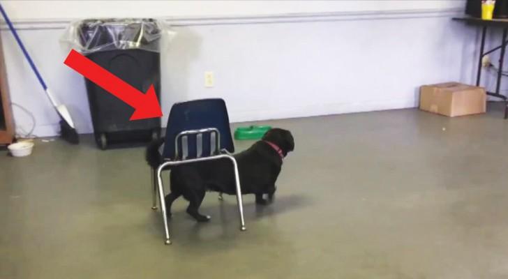Ce chien tout mignon est plus intelligent qu'il n'y paraît: ne le jugez pas sur les apparences!
