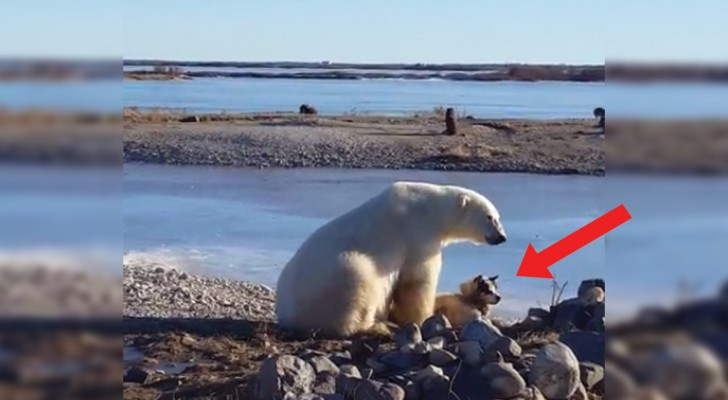An affectionate polar bear and a dog?