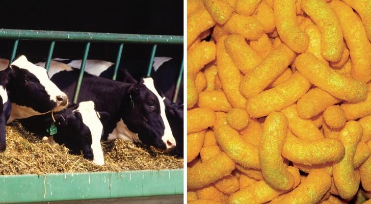 Da cibo per animali a snack per umani: ecco come furono inventate le patatine al formaggio