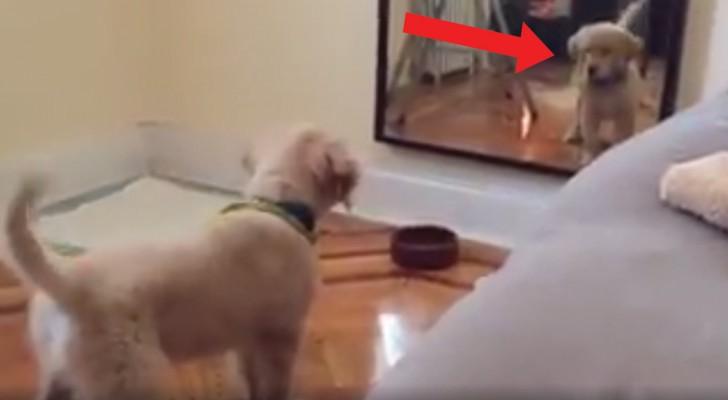 Questo cane si vede allo specchio per la prima volta: il mix di curiosità e diffidenza è simpaticissimo!