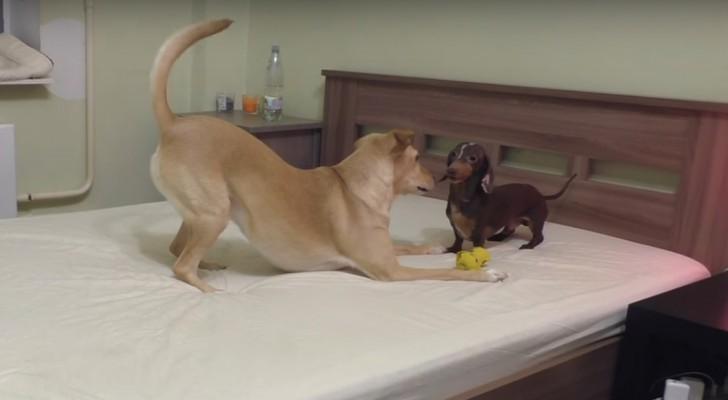 Il letto è da rifare: il modo in cui ne approfittano LORO vi farà venire voglia di unirvi al gioco!