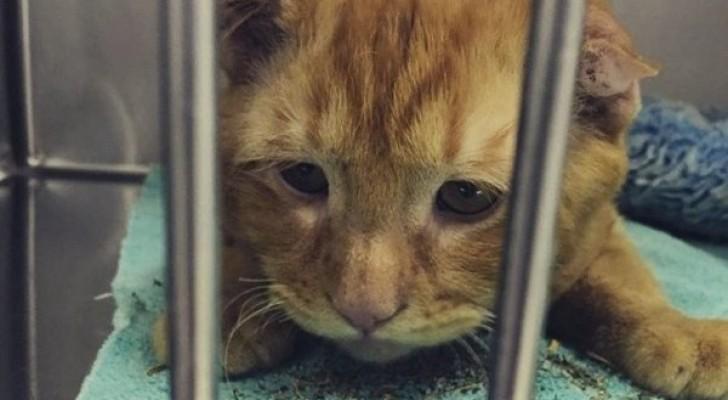 Hij werd bekend als de treurigste kat ter wereld: maar nu is BenBen de gelukkigste kat te wereld!