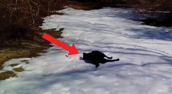 Spelen in de sneeuw: deze hond steekt zijn enthousiasme niet onder stoelen of banken!
