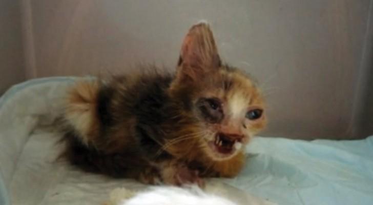 Niemand wilde hem adopteren, vanwege zijn misvorming: dit is de tol die de straat heeft geëist van deze kat!