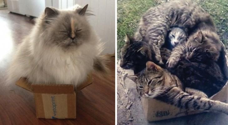Waarom zitten katten graag in dozen?