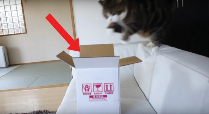 Un gato y su caja: los tentativos de hace para entrar dentro los divertiran tanto!